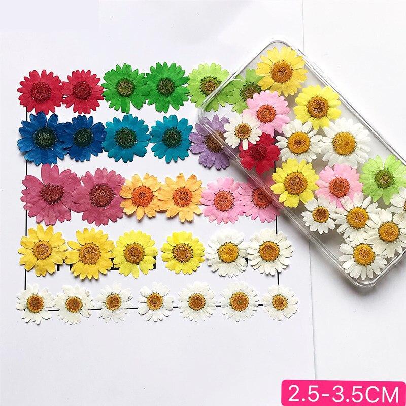 12 pçs secas pressionado branco margarida flor para resina de cola epoxy jóias diy fazer artesanato colar beleza decalque maquiagem flores seca planta