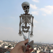 Halloween Prop Human Skeleton Full Size Skull Hand Life Body Anatomy Model Decor 3 Pcs Halloween Decoration 40cm hot sales vivid life size skull model