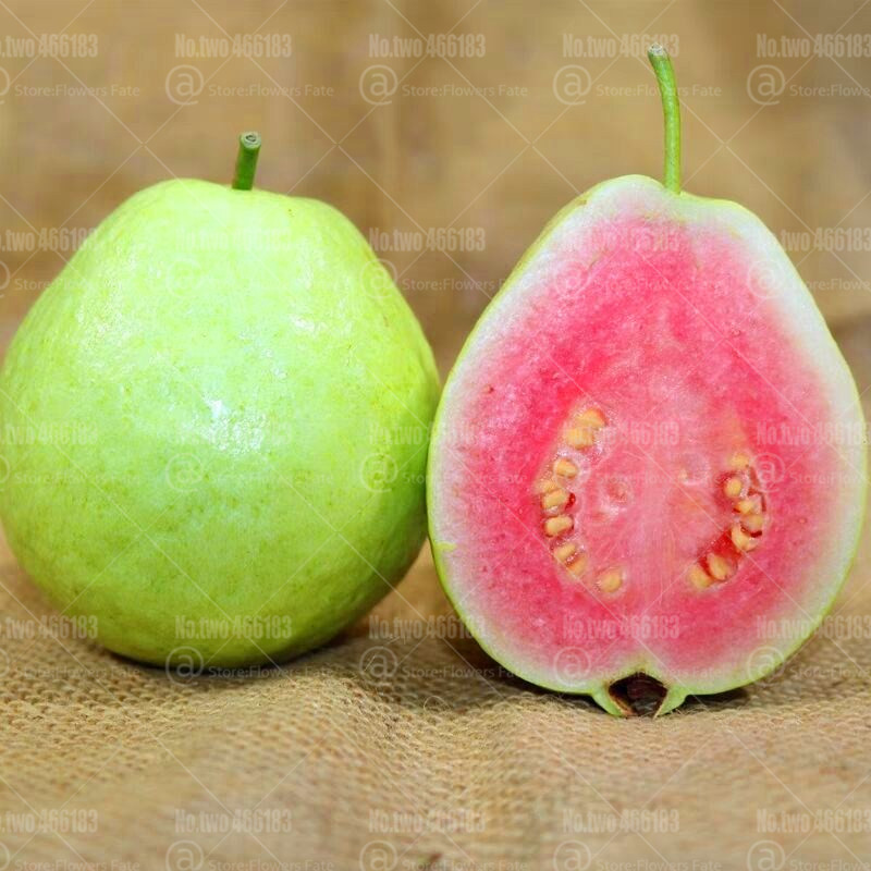30pcs Guava Bonsai Psidium Guajava Bonsai Fruit Tree Perennial Rare Fruit Pot Plants For Home Garden Planting