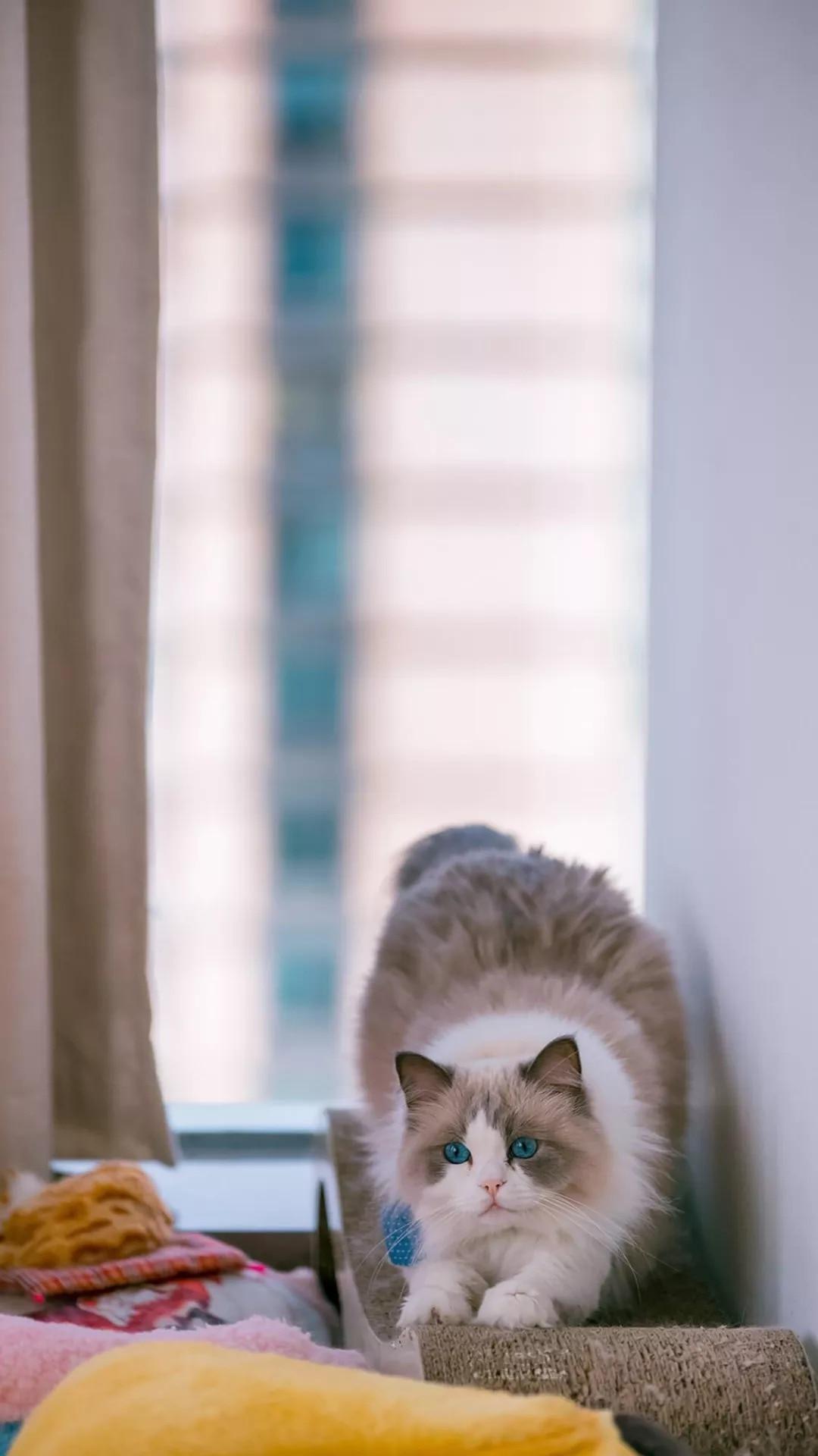 猫片壁纸 :生活不断拍打我们的脸皮,最后不是脸皮厚了,是肿了!插图3