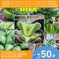 Суккуленты МИКС СЕМЕНА смесь видов (15 семян)