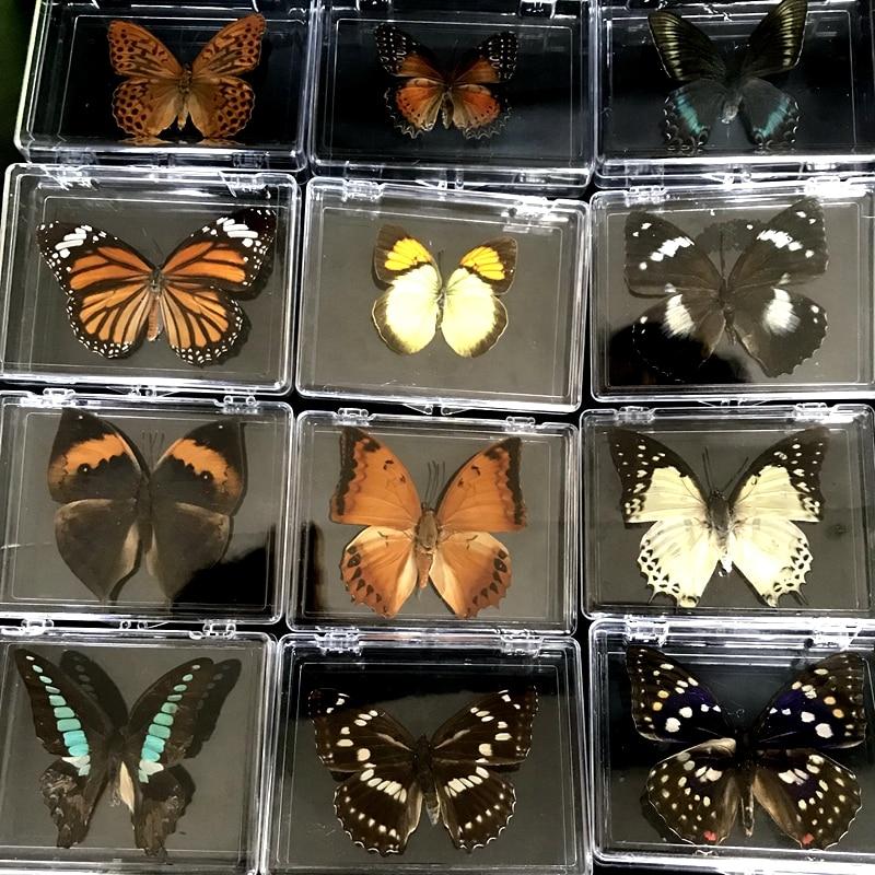 Коробка с реалистичными образцами бабочек, 1 шт., Красочные смешанные красивые бабочки для обучения, домашний декор, художественный материа...