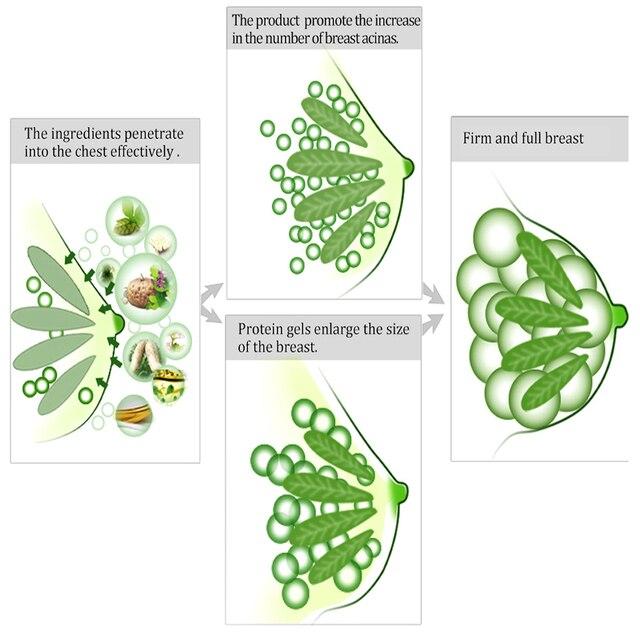تعزيز الثدي كريم تكبير الثدي تعزيز الهرمونات الإناث رفع الثدي ثبات تدليك أفضل ما يصل حجم التمثال الرعاية OMY سيدة 4