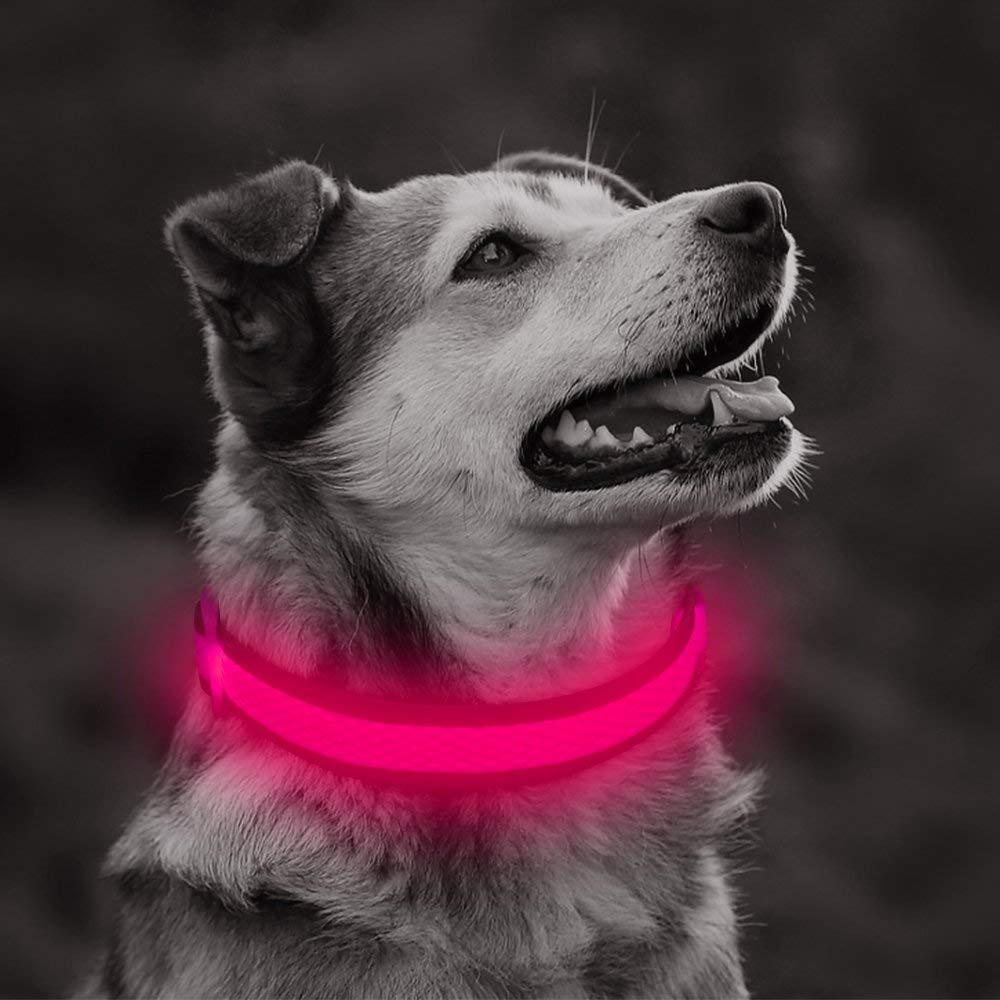 LED Light Night Safety Glowing Nylon Pet Dog Collar Supplies Cat Accessories For Small Dogs Collars