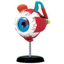 אדם עין אנטומי דגם התאסף אדם אנטומיה עיניים חידות מבנה שלד אדם אנטומי דגם