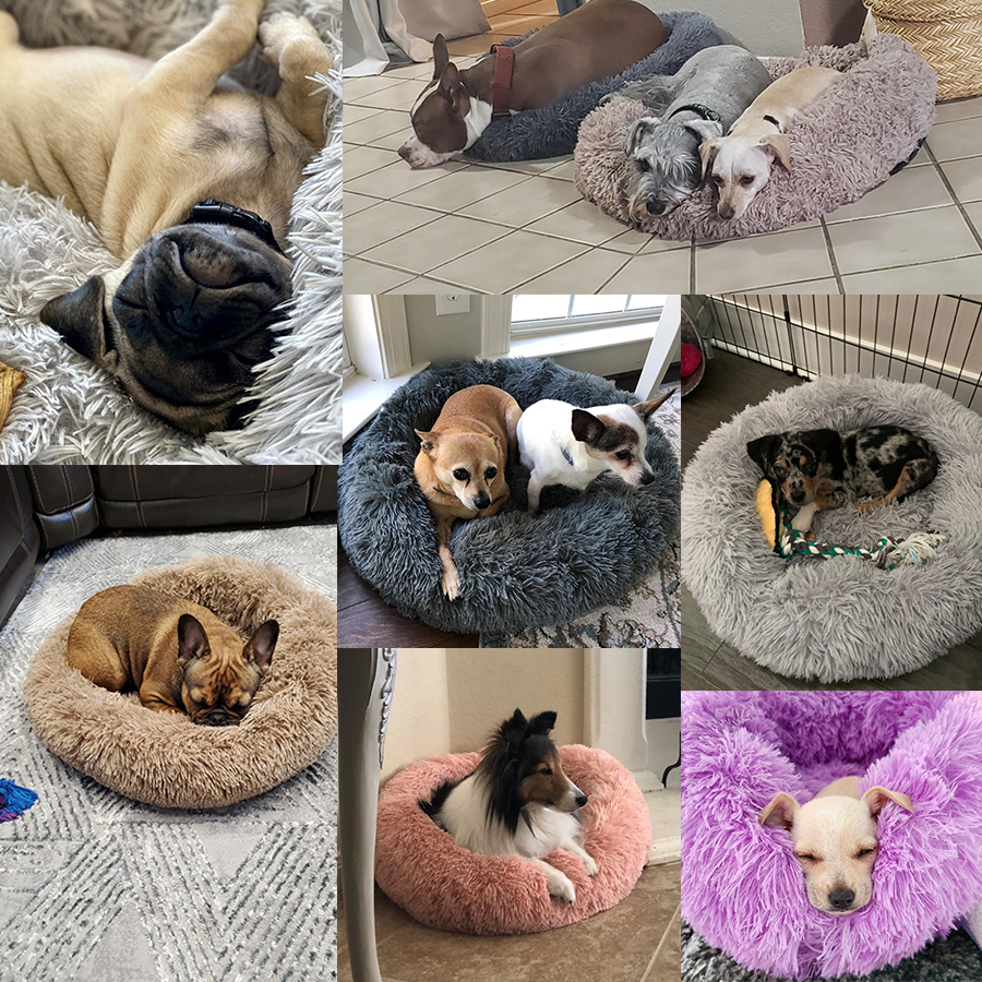 fluffy donut cat dog pillow msow