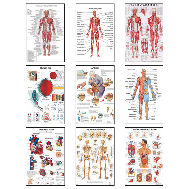 Human Anatomy Muscle System Art Canvas Painting, Body Art Picture and Poster Decoration Family Medicine Education, Frameless