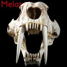 Tiger Skull Model Animal Skull Specimen