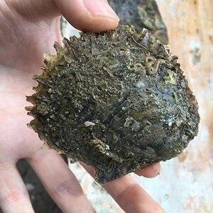 Image 5 - 4 kawałki wody morskiej hodowlane miłość życzenie perła ostryga 6 7mm perła ostryga na prezent