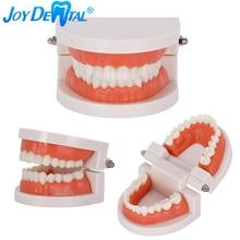 Dental 1: 1 Standard Tooth Mold Demonstrations Teeth Model Teaching Equipment Dentists
