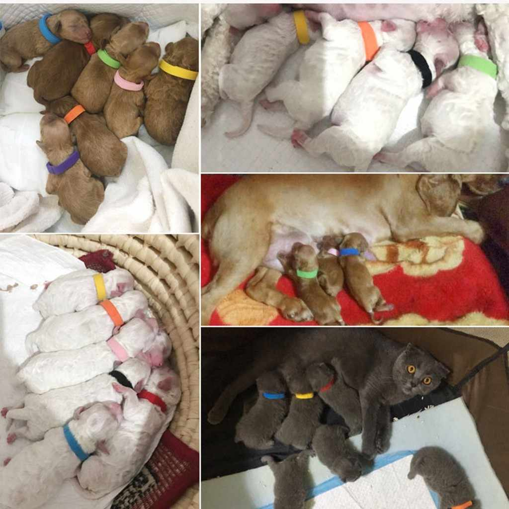 12 cores filhote de cachorro id coleiras macio ajustável & reutilizável adequado para animais de estimação recém-nascidos identificação colar pescoço cinta para cães gatos