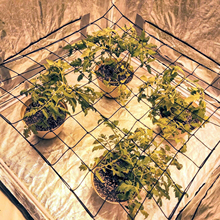 Grow Tent Netting Plant Elastic Garden Grow Tent Trellis Net For Indoor Vegetable Plants Garden Supplies
