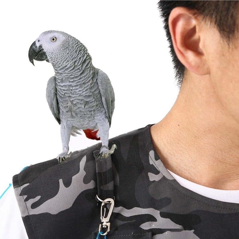 Cheap Treinamento de aves