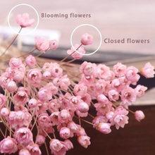 Fleur de petite étoile brésilienne Gypsophila, 30 pièces, décor artistique, accessoires de prise de vue de fleurs séchées, décoration de maison