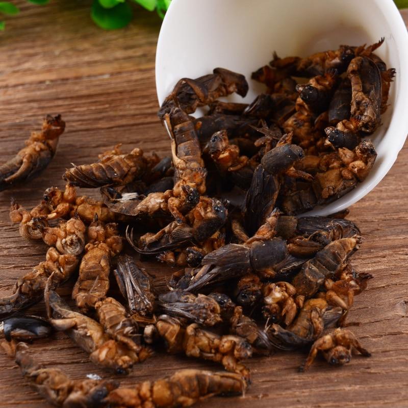 High Grade Wild Dried Mole Cricket 100g/250g Per Pack