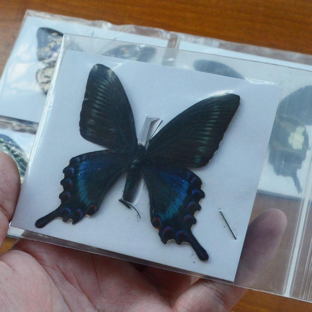10 pçs natural não montado borboleta espécime