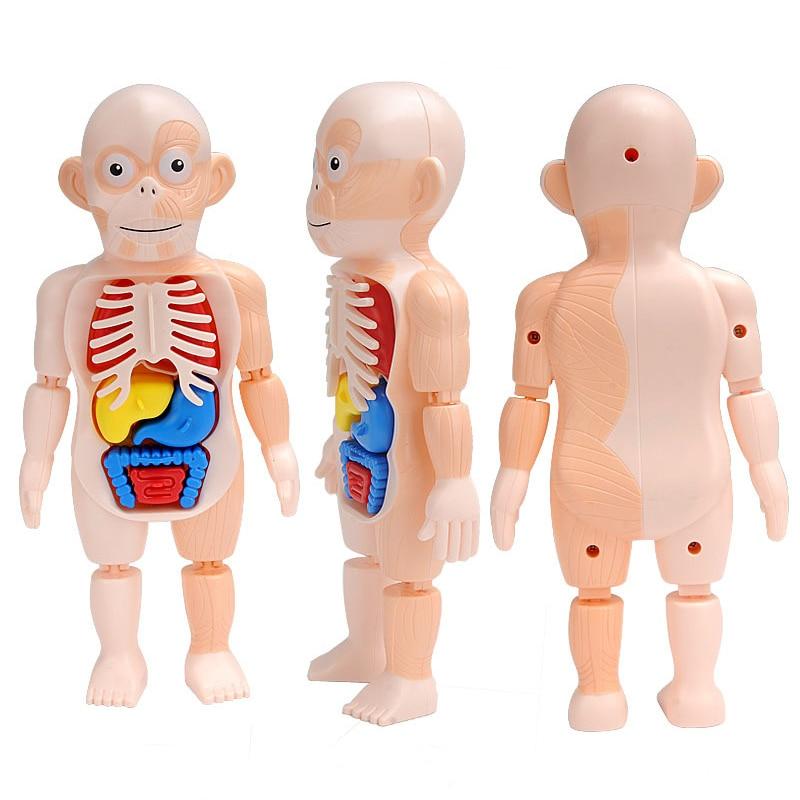 brinquedos didaticos para criancas h746w 03