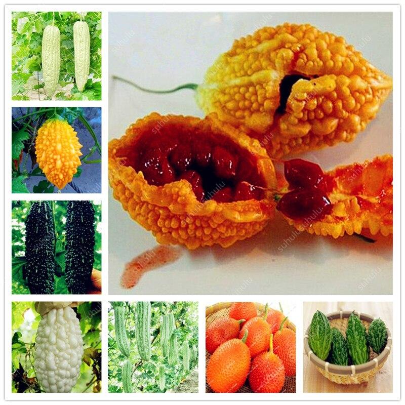 10 Pcs Balsam Pear Bitter Melon Bitter Gourd Kidney Momordica Charantia For Home Garden Vegetable Perennial Bonsai Plants