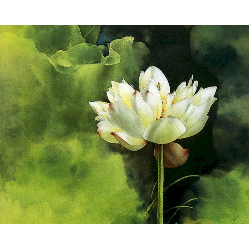 Painting By Numbers Frame lotus Flower Diy Modern Oil Painting HandPainted For Children adults By Kits Home Decor Acrylic Oil