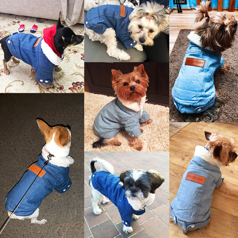Fashionable Denim Dog Jacket for Small/Medium Dogs to Protect Dogs from Cold 4
