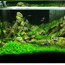 Aquarium plante aquatique eau herbe décoration comme jardin Aquarium premier plan plante