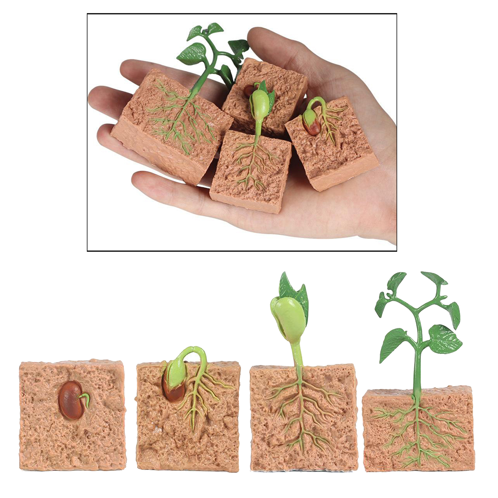 Kids Plant Seeds Growth Life Cycle Playset Cognitive Toys Teaching Aids 5