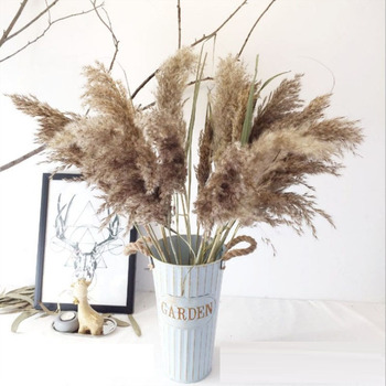 Real Dried Small Pampas Grass Wedding Flower Bunch Natural Plants Home Decor Dried Flowers Phragmites Flower Ornamental 7
