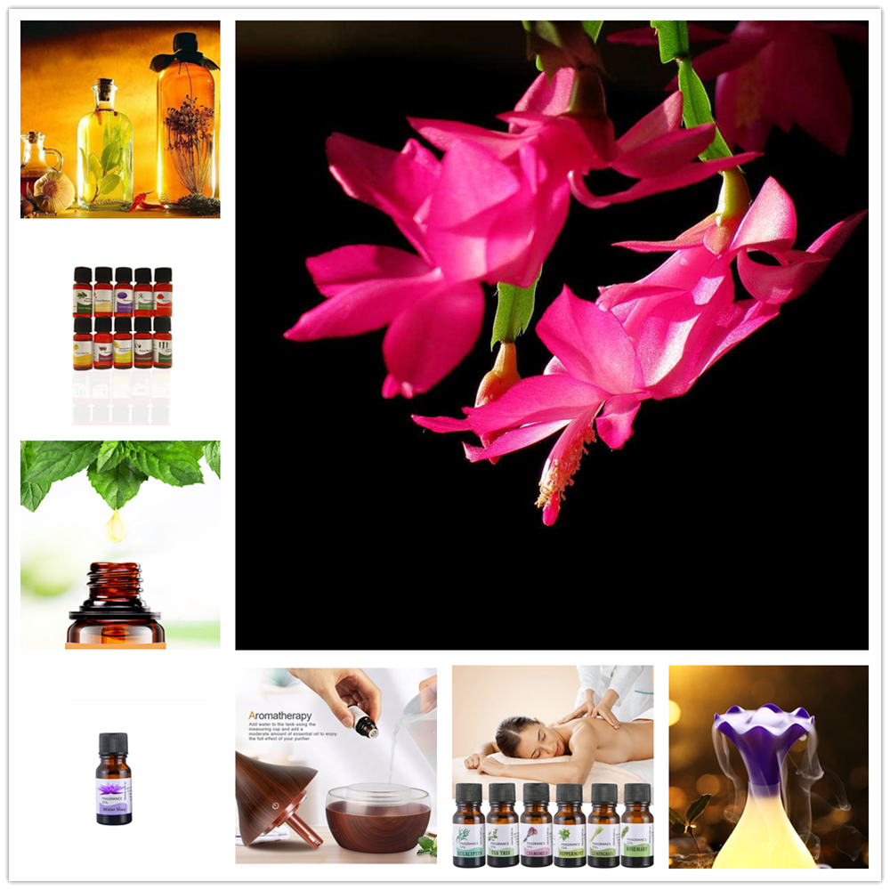Water-soluble Oil Essential Oils for Aromatherapy Lavender Oil Humidifier Oil Mimosa Fragrance rose green tea Kapok smell image