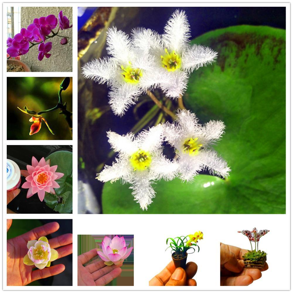 Plant Flower Bath Salts Finger Lotus Flowers Essence 100Pcs XZZ-226