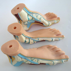 Human Foot Model Foo...