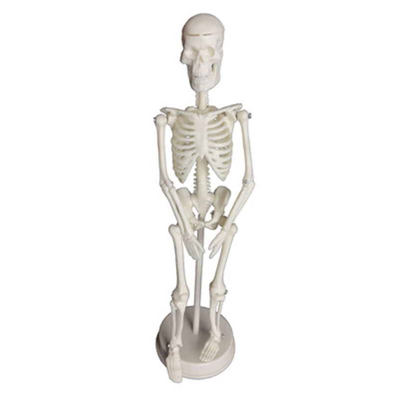 20cm Wholesale Flexible Medical Human Anatomical Anatomy Skeleton Model Human  Anatomical Boneco Toy In Medical Science Supplies