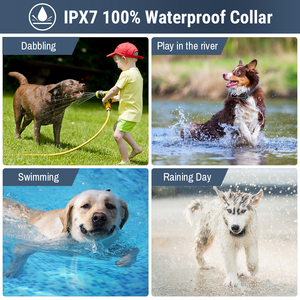 Image 4 - Petrainer 998DB 1 300M Rechargeable Waterproof Remote Control Dog Training Collar Dog Electric Shock Collar With LCD Display