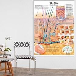 Плакаты с анатомическим разделением кожи, ламинированные настенные картины с принтом на холсте для медицинского образования, украшение дл...