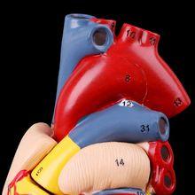 Разобранная анатомическая модель сердца человека анатомия медицинский обучающий инструмент LX9A