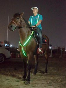 Riding-Equipment Webbing Horse-Harness Breastplate-Collar Night-Visible-Horse Led-Pferd