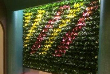某医疗诊所美容院绿植物墙(杭州现代国际大厦)