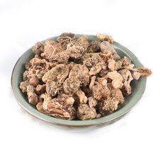 Arrowhead Mushroom(Shan Ci Gu)Edible Tulip