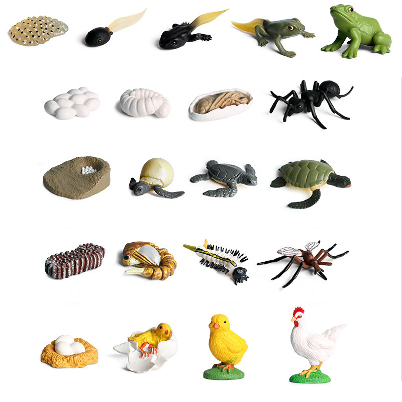 Small Mini Wild Animals Frogs Model Simulation Hatchery Tadpole Growing Cycle Action Figures Learning Educational Kids Toy
