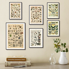 Vintage style canvas painting poster insect specimen high quality home decoration frameless o416