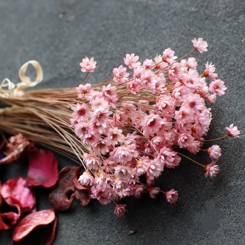 30/pcs Decorative Dried Flowers Mini Daisy Small Star Flowers Bouquet Natural Plants title=