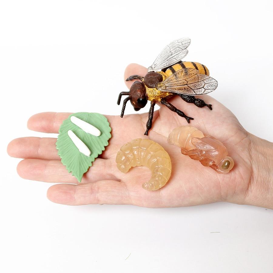 Имитация пчелы, жизненный цикл, игрушка, 4 шт. в наборе, демонстрирует жизненный цикл пчелы, модель, фигурки, миниатюрные развивающие игрушки