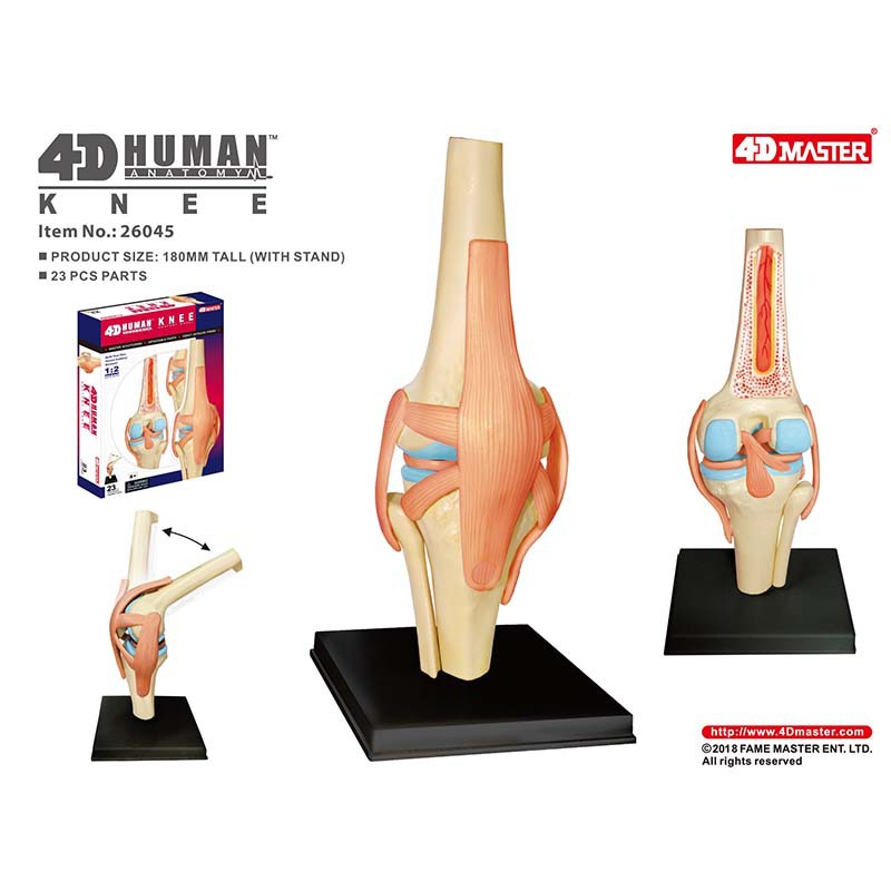 4D Anatomical Model Of Human Knee Joint Organs  Medical Teaching Puzzle Assembling Toys  DIY Science Popularization