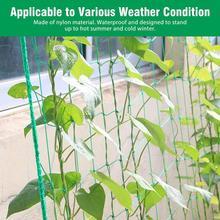 Net-Holder Glory-Use Morning Flower Vine-Plant Garden-Net Climbing-Net Home-Support Grow