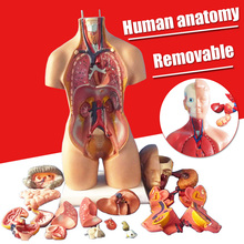 1Set 4D Anatomical Assembly Model Of Human Organs Home Room DIY Decoration Accessories Ornament Small Size