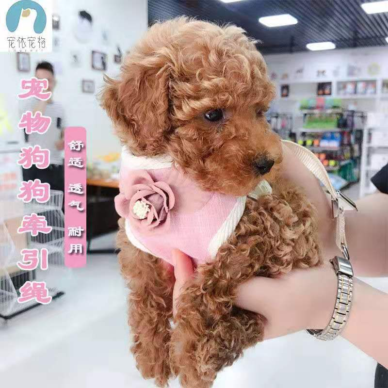 Dog Hand Holding Rope Pomeranian Teddy Supplies Small And Medium-sized Dogs Vest Style Walk Chain Cat Puppy Dog Suspender Strap