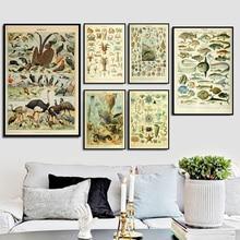 Océano mar Concha pez Animal Vintage carta de vida Cartel de la biología imprimir pintura arte de la pared cuadros de estilo nórdico para la decoración del hogar de la sala de estar