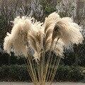50 pçs flor seca reed flor de pó grama de trigo seco flor loja de casamento decoração ornamento adereços flor seca