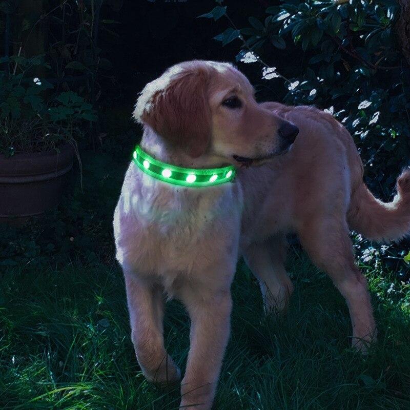 Pet Supplies Cat's Eye Gemstone-USB Charging LED Luminous Dog Collar Dog Traction Rope
