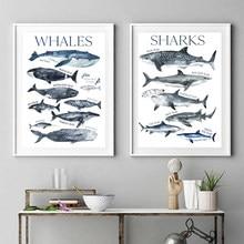 Aquarelle baleine impression pépinière mur Art toile peinture requin affiche plage nautique mur photo décor enfants chambre décoration murale