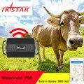 TKSTAR GPS трекер животного для корова верблюд овец TK935 3000 мА/ч, локатор Водонепроницаемый Автомобиля Магнит голос мониторы Бесплатная веб прило...